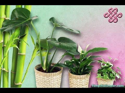 ... , Feng Shui de las plantas: El romero sirve para atraer el amor