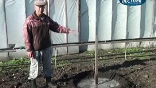 """""""В помощь садоводам"""" Посадка черешни и  абрикоса"""