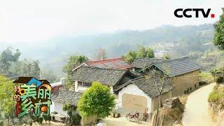 乐在昌宁!探访澜沧江边的秘境村落,寻千年茶乡散落的古茶树 | CCTV「我的美丽乡村」20210404 - YouTube