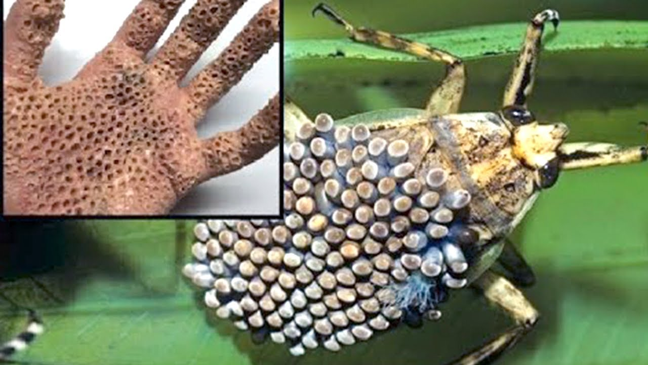 Download 15 Dangerous Animals You Should Never Touch