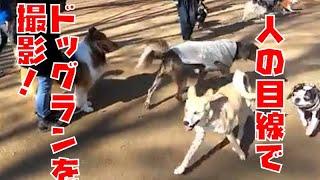 ドッグランが怖い!他犬が怖い! これを観れば代々木公園のドッグランの...