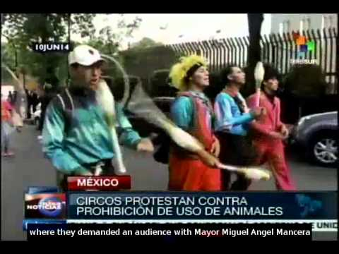Circus performers protest in Mexico against banned use of animals