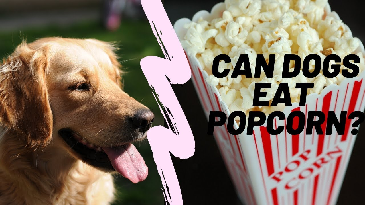 Can Dogs Eat Popcorn?? - YouTube