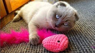 КОШЕЧКА Орлан уже освоилась! Новая игрушка для КОТЕНКА! Кошка пьет воду из стакана! Видео для детей