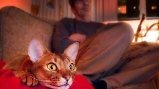 Коты и собаки смотрят телевизор