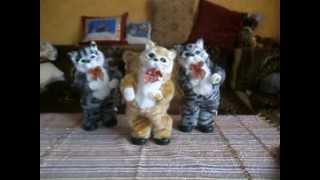 кошки танцуют