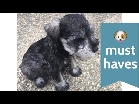Puppy Must Haves for our Miniature Schnauzer