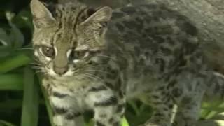 Video Stock Footage Free Download | Wild Animals Free Footage | Animals Stock Footage Free Download