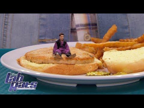 Honey, I Shrunk Adam! | Lab Rats | Disney XD