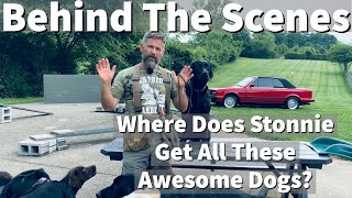 Behind The Scenes   Where Does Uncle Stonnie Find All These Awesome Dog Training Clients?