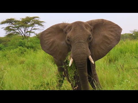 Tanzania, Africa   cinematic travel video