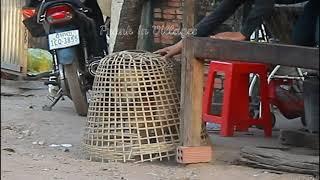 Chicken Coops vs Prank Dog/Big Box Prank Video/Funny Video 2021