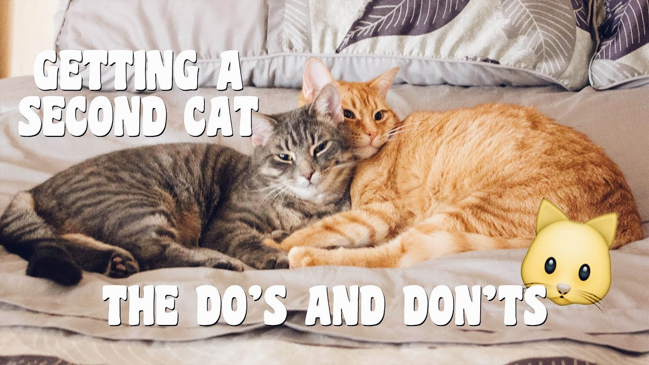 How to Bring a Second Cat Into the Family and Not Make Your Old Cat Upset