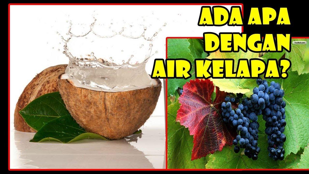 Tis Benarkah Air Kelapa Sbg Pengganti Em 4 Coconut Water Can Change Em4 Youtube