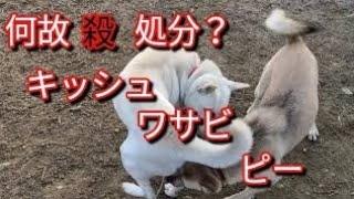 四日市動物愛護団体つむぎ様ブログ https://ameblo.jp/tumugi0401/ 保護...