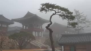 지리산 화엄사 운무속 아침 (2020년 12월 29일)