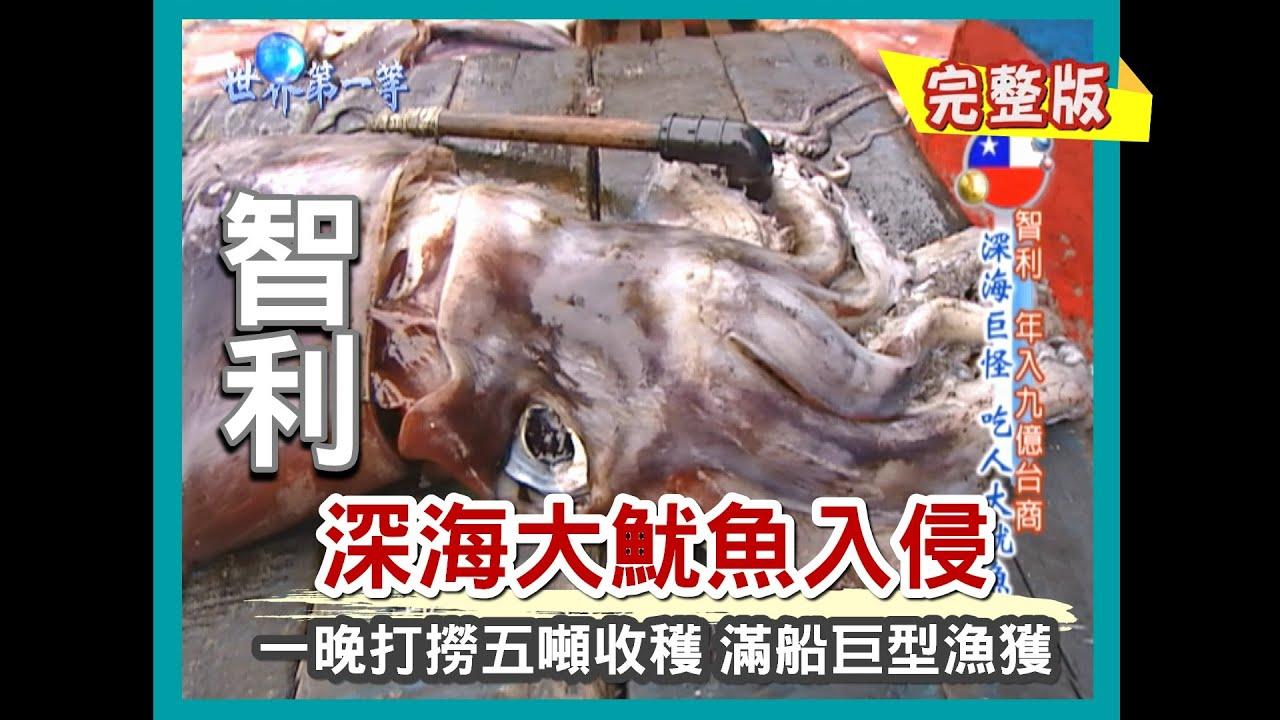 【智利】深海大魷魚現身(象魚魚翅加工廠 / 巨型怪貝藤壺 / 炭烤巨大魷魚)|《世界第一等》272集小馬完整版