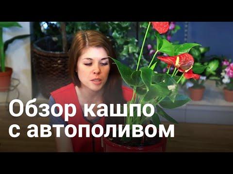 "Кашпо с автополивом ""LECHUZA"""
