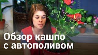 видео lechuza купить | видеo lechuza кyпить