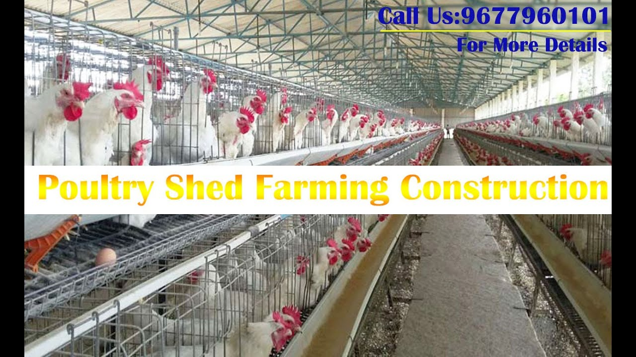 Poultry Farming Shed Construction In Chennai,Trichy
