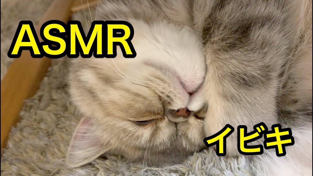 猫 いびき エコー