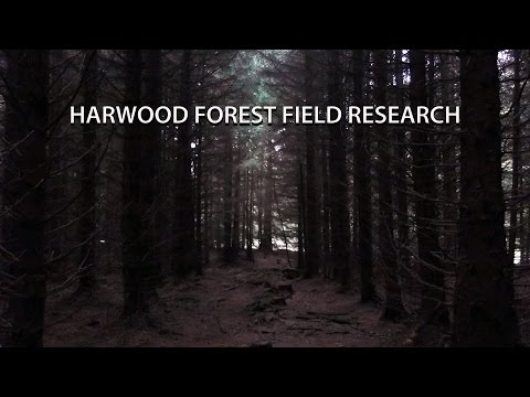 Harwood Forest Field Research