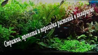 Стрижка, прополка и пересадка растений в аквариуме