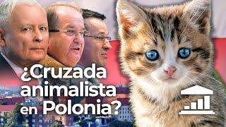 POLONIA: ¿Pueden los derechos de los Animales ROMPER la coalición Conservadora? - VisualPolitik