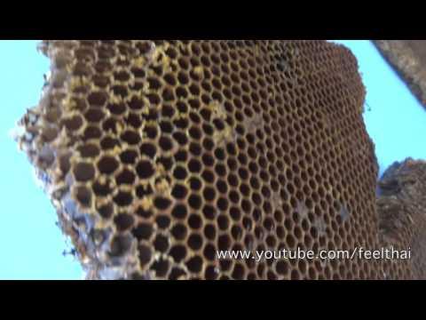 แผนที่ไทยทำจากรังผึ้ง ที่แม่ฮ่องสอน