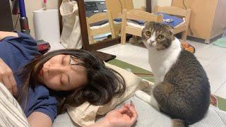 二度寝中のママに甘えるパパ猫