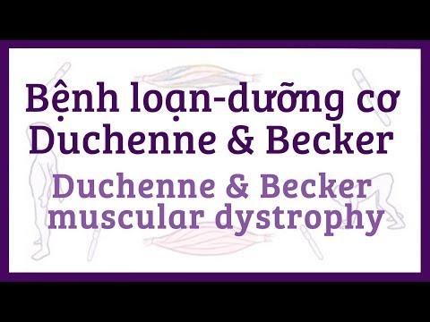 Bệnh loạn-dưỡng cơ dạng Duchenne & Becker  - nguyên nhân, triệu chứng, điều trị & bệnh lý