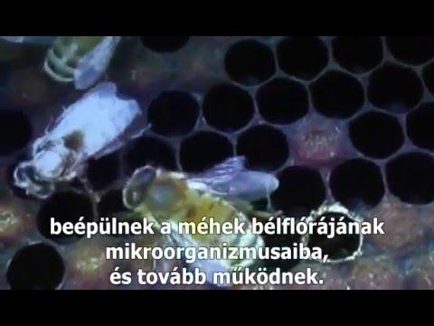pénzt keresni az interneten méhek)
