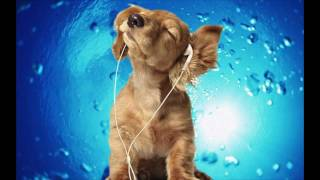 Classical Songs for Dogs - Calming Pet Music DESIGNED for your Dog- Air