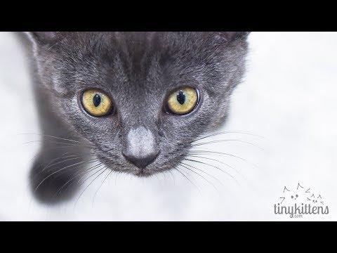 LIVE: Hyatt the blind feral cat - TinyKittens.com