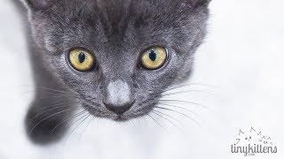 LIVE: Hyatt the blind feral cat - TinyKittens.com