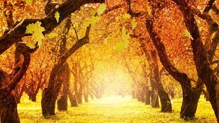 "Peaceful music, Relaxing music, Instrumental music ""Golden Autumn Peace"" Tim Janis"