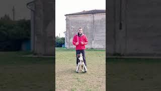 Best TikTok #mydogs #bordercollie #teamdkr #tricks #