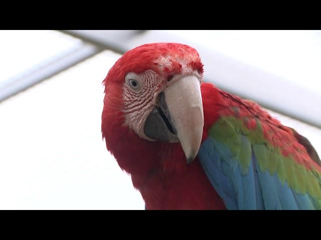 Papouščí láska na život a na smrt