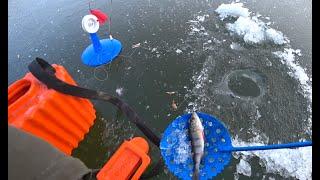 Первый лёд 2020 2021 Зимняя рыбалка на ЖЕРЛИЦЫ Щука на балансир