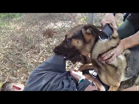 Download Youtube: Suspect Apologizes After K9 Takedown Following Pursuit