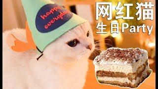 女主播斥巨资给网红猫过生,豪华酷炫生日party,人看了蛋糕想吃