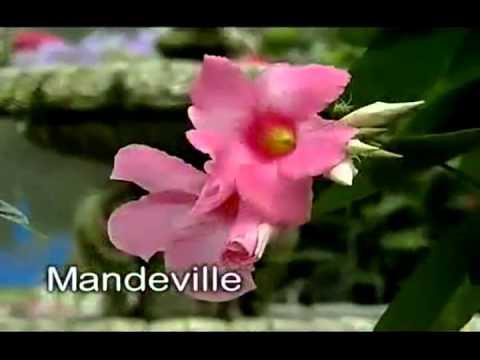 GET GROWING 4 TROPICAL PATIO PLANTS