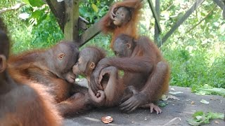 BUDI AND JEMMI MAKE NEW FRIENDS