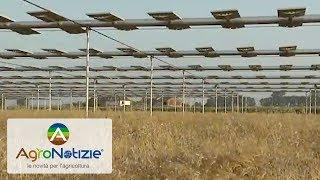 Agrovoltaico, l'energia per l'agricoltura 4.0