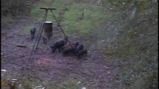 """East Texas Whitetails """"Pig Squeeling""""--Dad"""