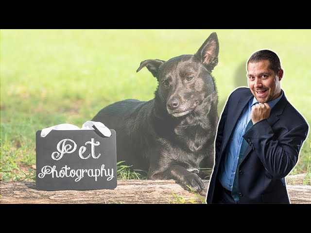 Pet Photography with Rebekah Nemethy