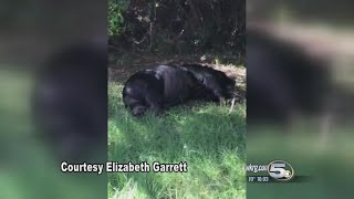 Local Woman Finds Bear Shot To Death in Her Backyard