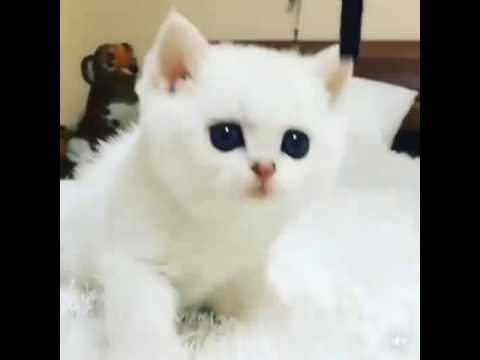 Funny Cats Compilation 2016  Cats are so funny you will die laughing Best Of Cute Kittens Meowing