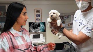 اول مرة كلبنا الجديد يروح الدكتور 👨⚕️!!
