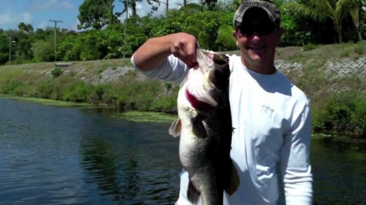 Everglades bass fishing guides 11 pound monster bass lake for Everglades fishing guide